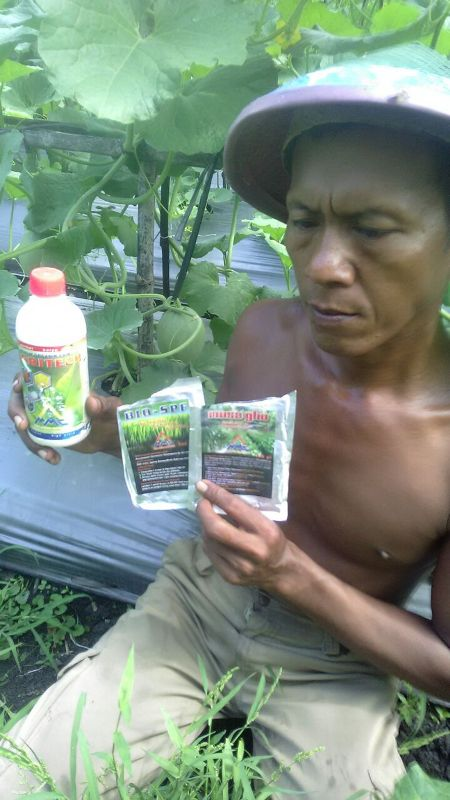 Melon - Ngawi -umur 35 Hari - dengan petugas kebun - dan produk MMC - agritech bio-spf serta mosa glio