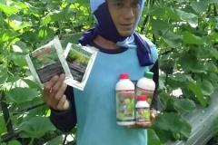 Melon - Ngawi -umur 35 Hari dengan produk MMC-dengan penjaga kebun serta produk MMC Agritech BIO-SPF serta mosa glio -2