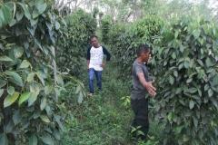 Beberapa petani lada gunung seriang yang ditemui oleh tim dari MMC dan kebun lada mereka