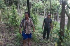 Beberapa petani lada gunung seriang yang ditemui oleh tim dari MMC