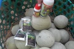 100_1324-Panen-melon-melimpah-dan-berkualitas-dengan-produk-MMC
