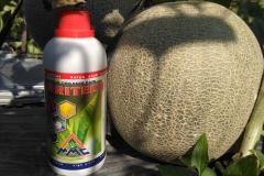 IMG_20180502_150505-Agritech-untuk-panen-melon-yang-maksimal