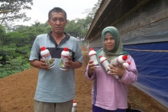 manfaat-suplemen-ternak-vitto-dengan-asam-humat-untuk-budidaya-ayam-potong