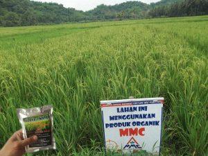 bio-spf untuk budidaya padi