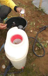 dosis penyemprotan hortech untuk budidaya lada adalah 1 tutup hortech banding 1 tutup hortech per 1 tangki 14 liter