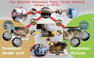 fermentasi kambing - bagan