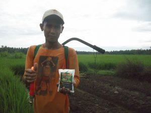 mosa bn untuk pengendalian hama walang sangit penggerek batang wereng pada budidaya padi