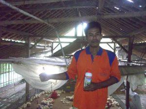 vitto untuk ayam potong - saryanto wonogiri