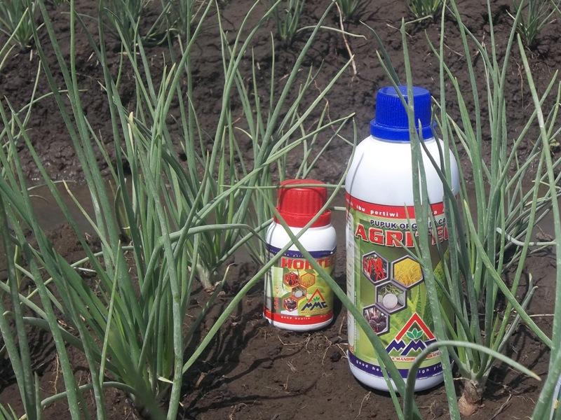 Agritech-untuk-budidaya-bawang-merah
