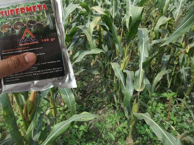 supermeta untuk budidaya jagung