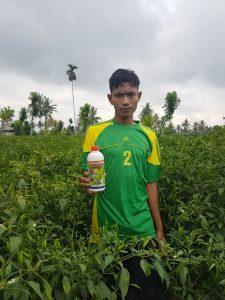 pupuk organik agritech untuk budidaya cabai