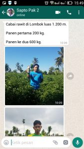 testimoni petani Cabai rawit di Lombok :luas 1.200 m. Panen pertama 200 kg. Panen ke dua 600 kg.