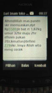 Whatsapp dari bapak imam tentang vitto terna