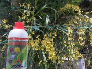 Agritech untuk budidaya anggrek