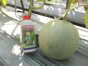 Agritech untuk tanaman melon