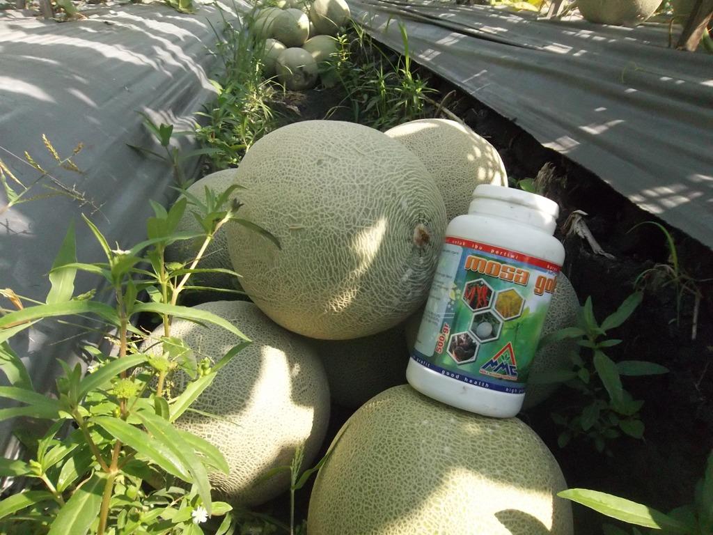 Mosa Gold unutuk tanaman melon
